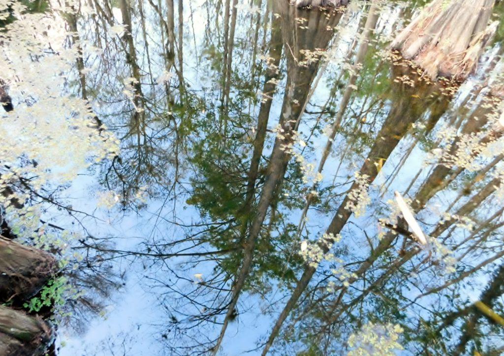 Bäume spiegeln sich im Wasser in Florida