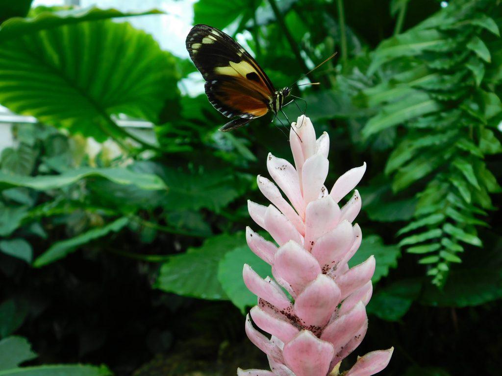 Flora und Fauna in den Everglades