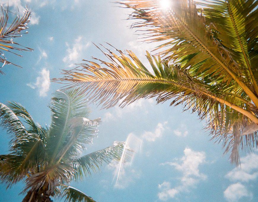 Blick von unten auf zwei Palmenkronen und Sonnenschein Floridas