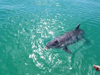 Delfine hautnah im Kanal von Cape Coral