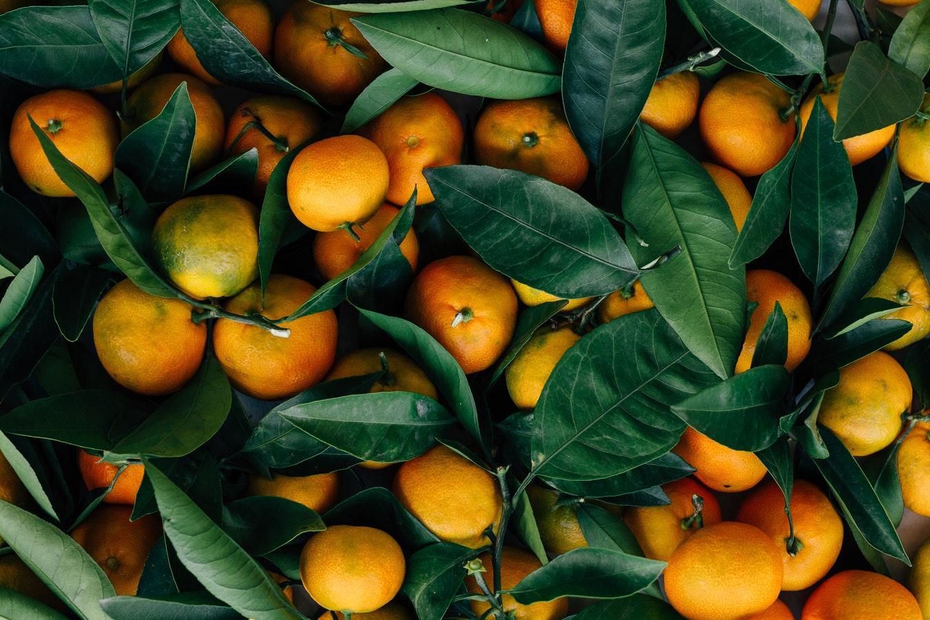 Orangen aus Florida